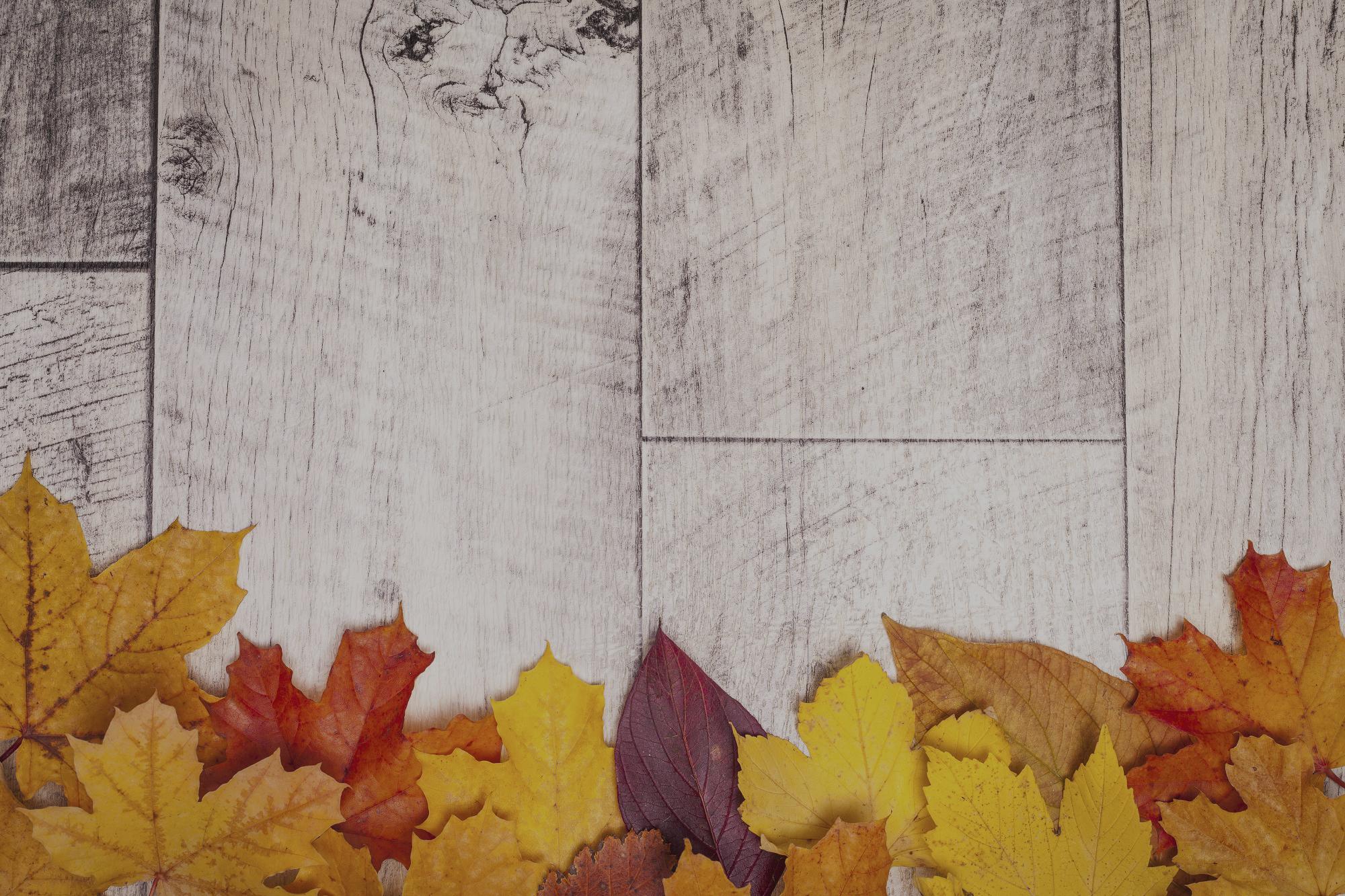 Fall-smaller-web1
