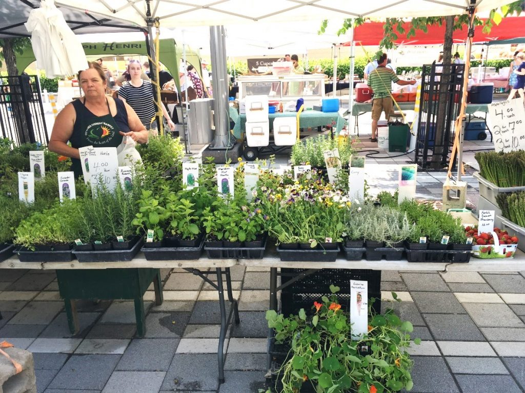 Local herb stand at the Ottawa Farmers' Market at Lansdowne